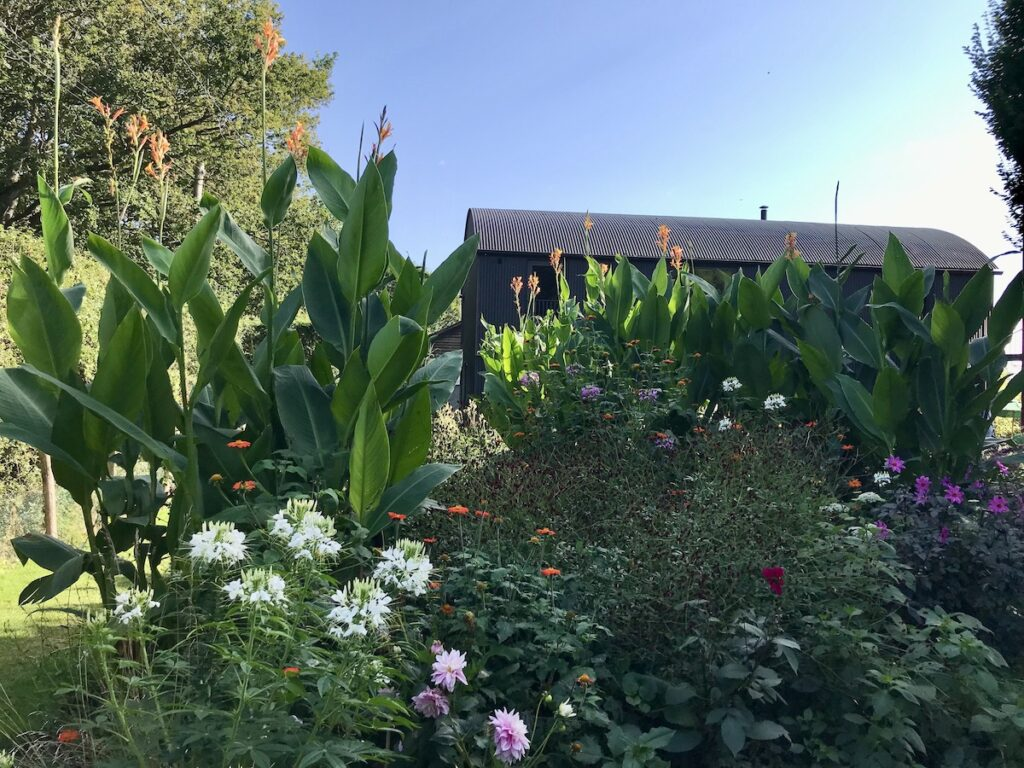 Canna lilies and plants in front of a building