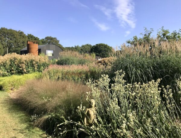 Tall plants and flowers in the Prairie Garden with the backdrop of a farm building